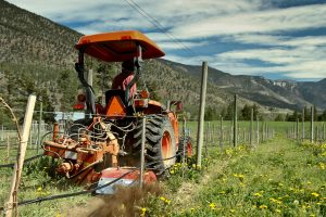 In a new planting Eckhard uses the offset tiller to control weeds. At Cliff and Gorge we do not use any herbicides.